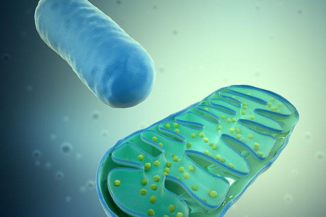 Zespół mitochondrialny